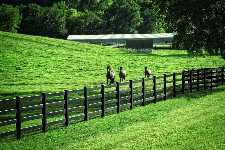 Diamond Rail Ranch Horse Fence Blacklinehhp