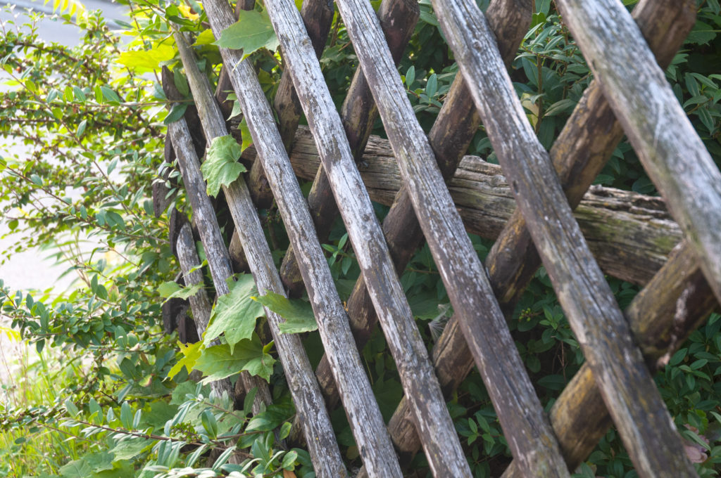 A trellis fence decorated with leaves and greenery.