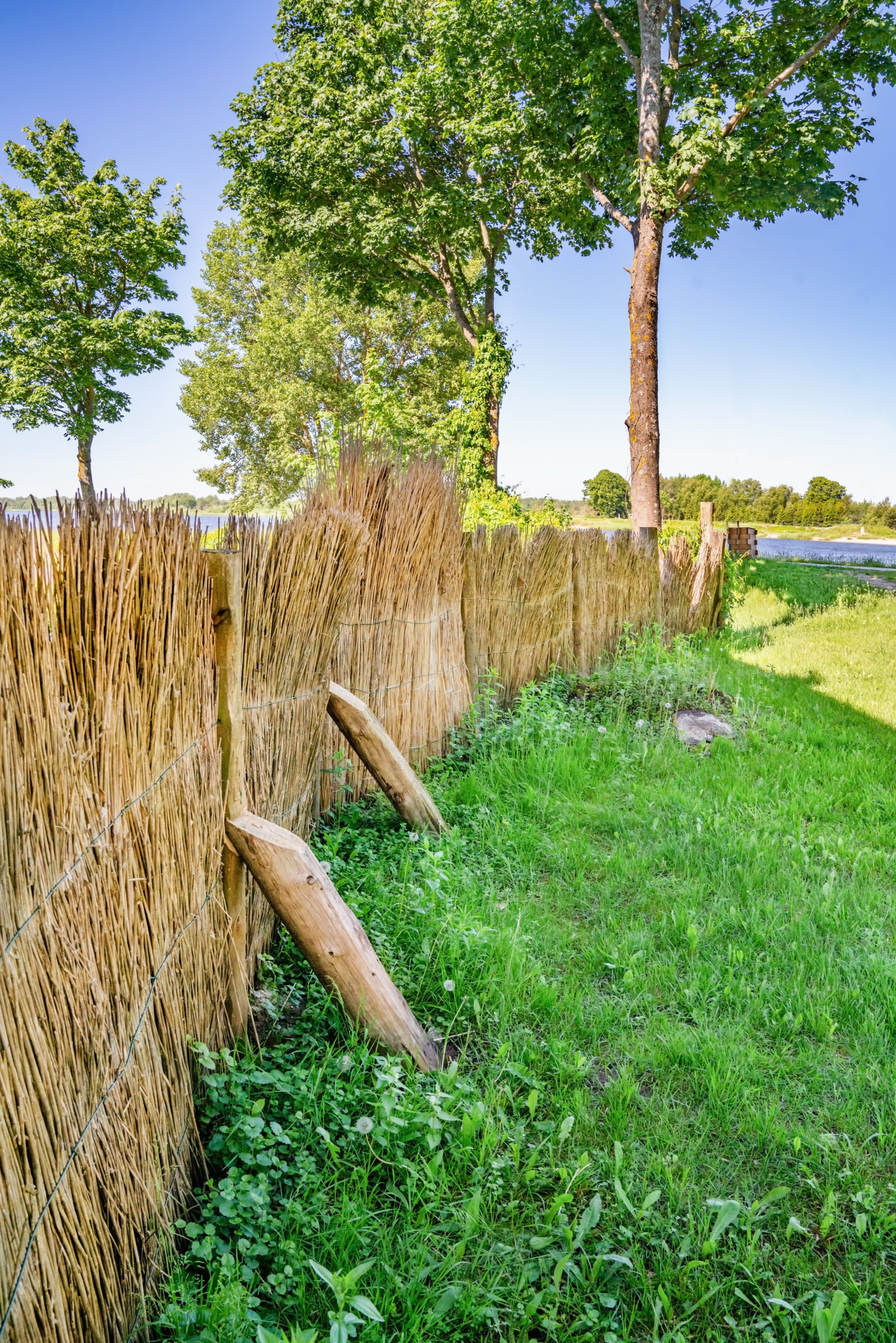 A reed fence enclosing a yard with grass and trees.